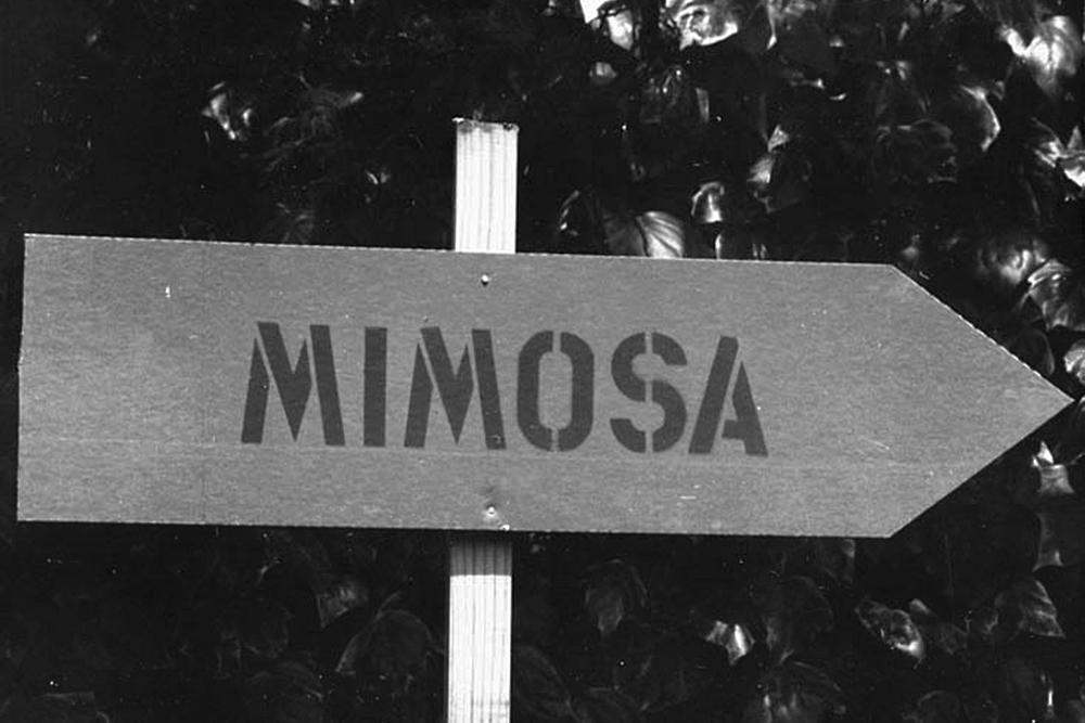 Senyalització d'una Mimosa, obra d'America Sanchez